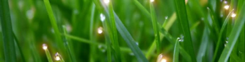 cropped-grass3.jpg