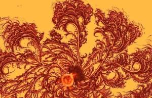 fractal_bacteria_colony_4