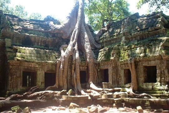 angkor-546024 roots